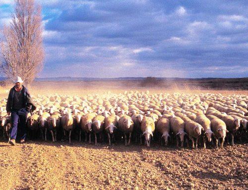 Ayudas y eficacia para el ovino y caprino