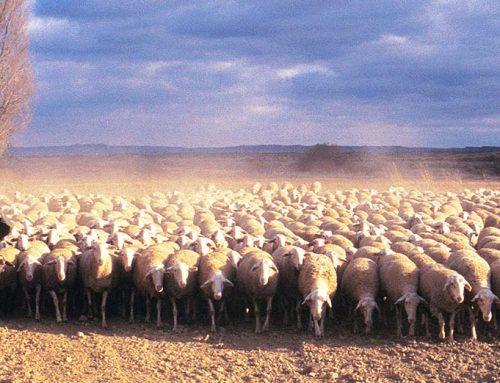 Ecoesquemas y ganadería extensiva