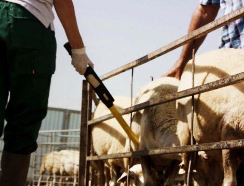 Cambios en la normativa de movimiento de animales identificados electrónicamente