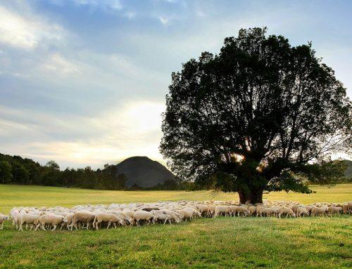 La ganadería extensiva favorece la sostenibilidad