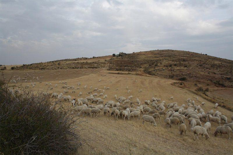 La ganadería extensiva es beneficiosa para el medio ambiente