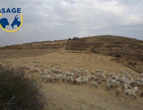 Principales conclusiones del proyecto ISAGE para la sostenibilidad de la ganadería ovina y caprina