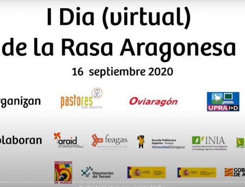 Día de la Rasa Aragonesa y Concurso aragonés de machos caprinos