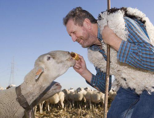 Paco Marcén, una vida de pasión por el ovino y el cooperativismo