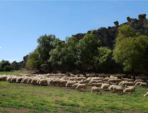Propuesta de apoyos a la ganadería extensiva en la nueva PAC