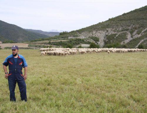 Casa montañesa, ovejas y puertos de montaña: un tridente que mantiene nuestro Pirineo.