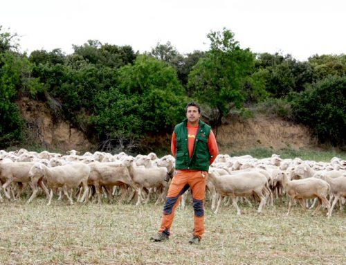 """Agropecuaria Rodellar: """"Utilizamos henos propios para el ganado y los complementamos con RUM MEZCLA OC-01"""""""